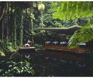 Restaurant im Dschungel