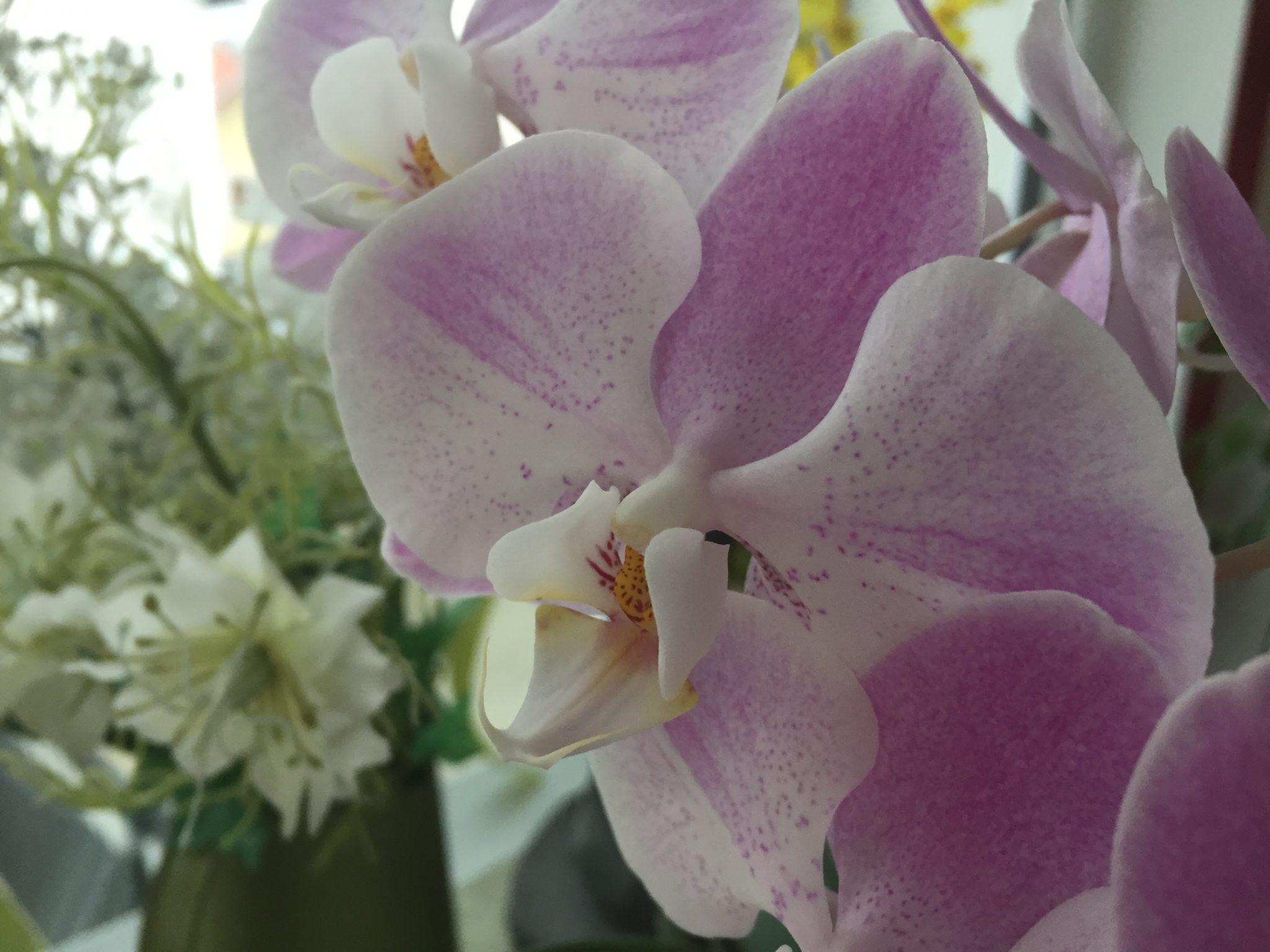 Orchidee aus dem Wintergarten