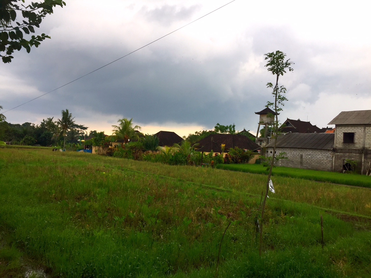 Reisfeld in Ubud.